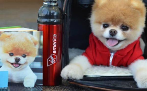 Virgin America เลือกน้องหมาเป็นพรีเซ็นเตอร์