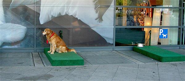 ikea ทำที่จอดสุนัขก่อนเข้าห้าง!