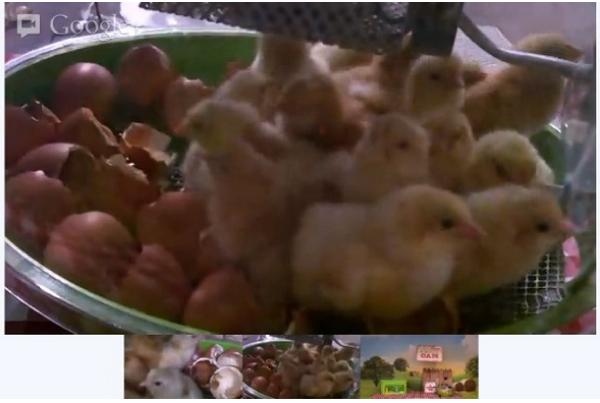 บริษัทขายไข่โปรโมทการฟักไข่ผ่าน Youtube