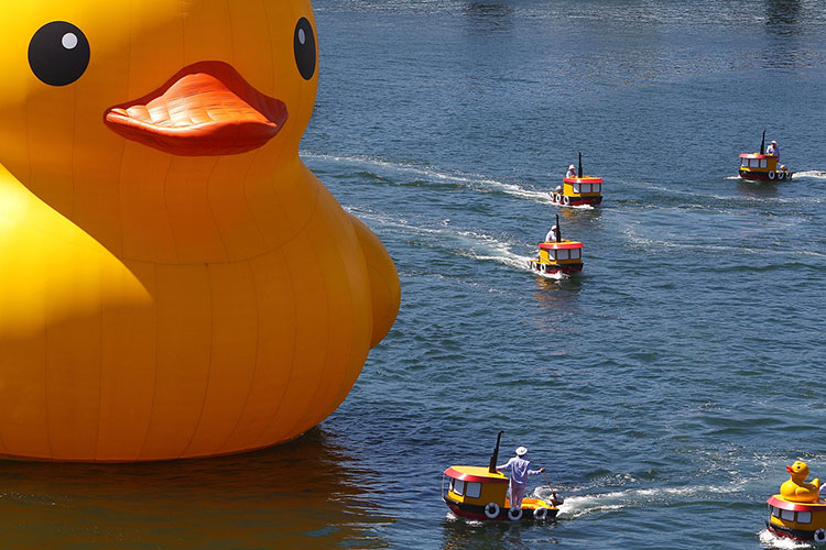 HK-duck-15