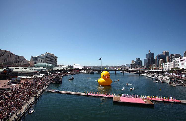 HK-duck-16