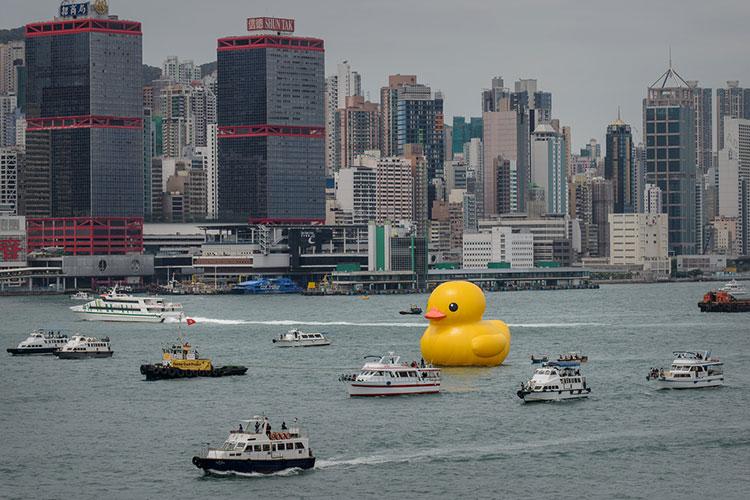 HK-duck-7