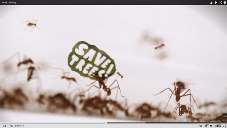 wwf-ant-rally-1