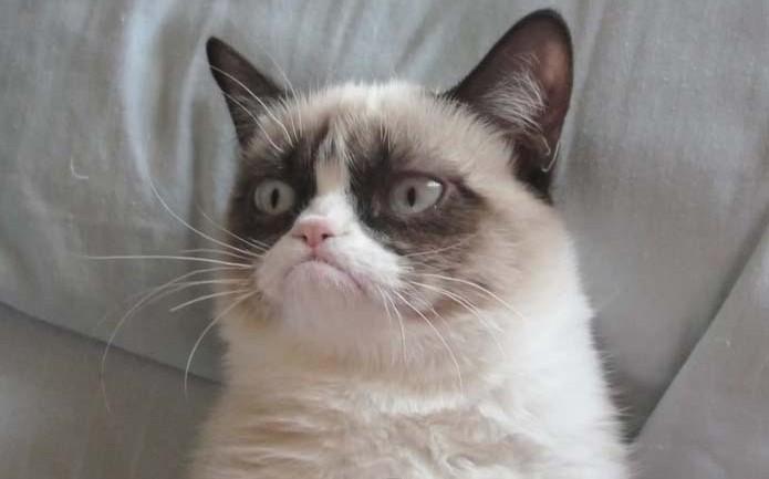 หน้าบึ้งจนได้ดี … Grumpy Cat กลายเป็นแบรนด์