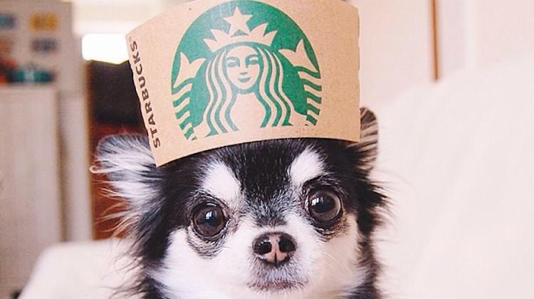 "Starbucks โผล่ในทำเนียบ""รูปน่ารักที่สุด""บน Instagram"