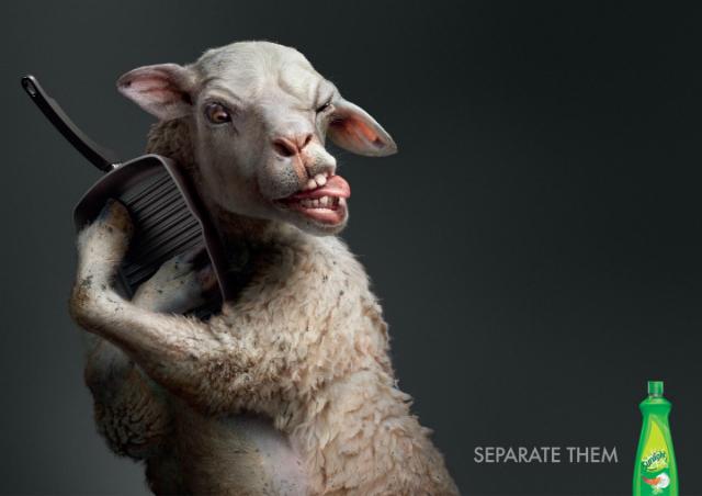 Lamb-Sunlight-640