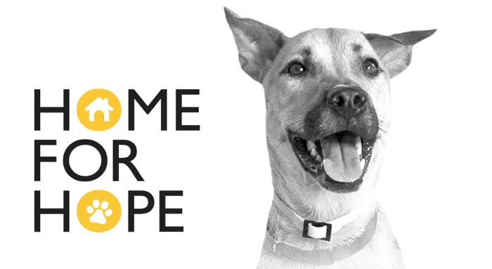 NGO สิงคโปร์ พาน้องหมาหาบ้านใหม่ใน IKEA