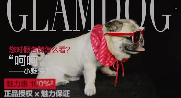 [case study] แบรนด์แฟชั่นจีนจ้างน้องหมาเป็นพรีเซนเตอร์-เพิ่มยอดเข้าเว็บกว่า 6 ล้านครั้ง!