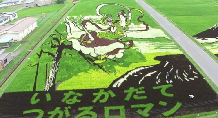 เผยวิธีการทำงานศิลปะบนผืนนาของชาวญี่ปุ่นที่คว้ารางวัลจากงานประกวดเป็นกระบุง