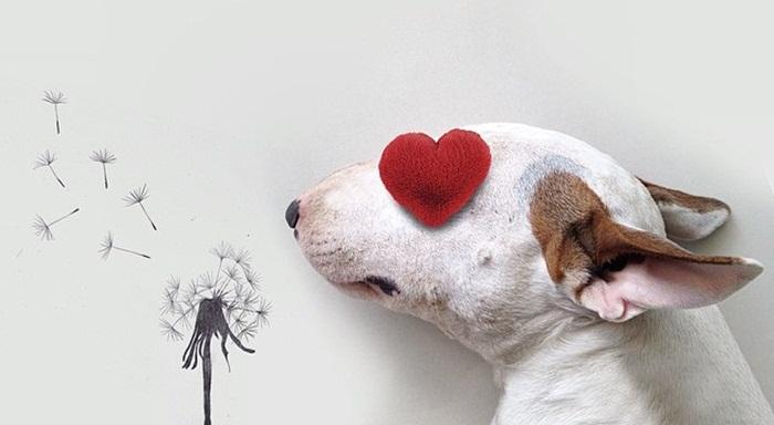 ศิลปินบราซิลเติมเต็มบ้านเงียบเหงาด้วยภาพถ่ายศิลปะจากน้องหมาคู่หู