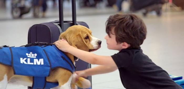 สายการบินเจ๋งใช้น้องหมาส่งคืนของหายให้ผู้โดยสาร-แต่น่าผิดหวังที่เป็นเพียงแคมเปญโฆษณา?