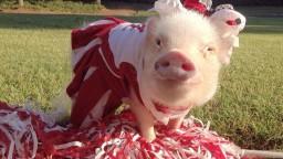 piggy7