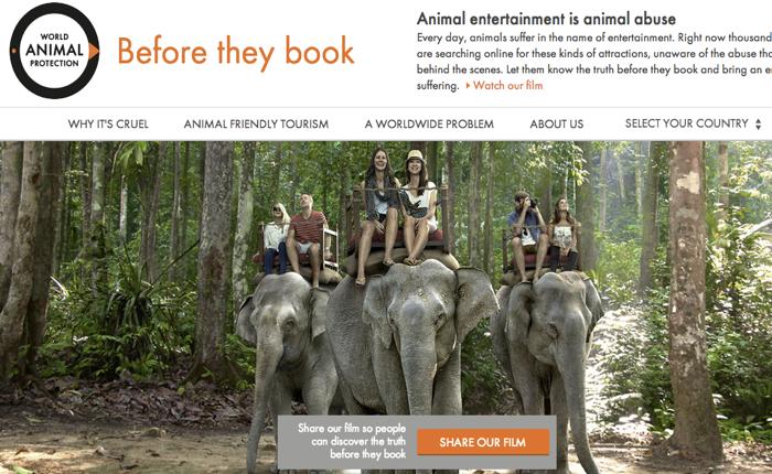 องค์กรพิทักษ์สัตว์หัวใส สร้างเว็บ ทำ SEO สอนนักเสิร์ชให้ท่องเที่ยวแบบห่วงใยสัตว์