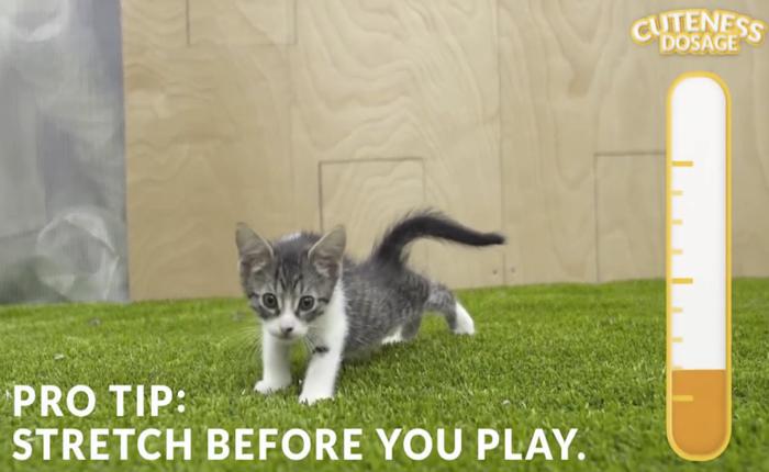 แบรนด์สินค้าเพื่อน้องเหมียวผุดบริการใหม่ Kittentherapy ใช้ลูกแมวบำบัดเครียด!