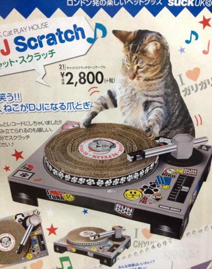 cat-dj