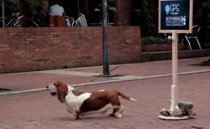 รองเท้า Hush Puppies ใช้น้องหมาเป็นไกด์พาคนเข้าร้านช้อปรองเท้า