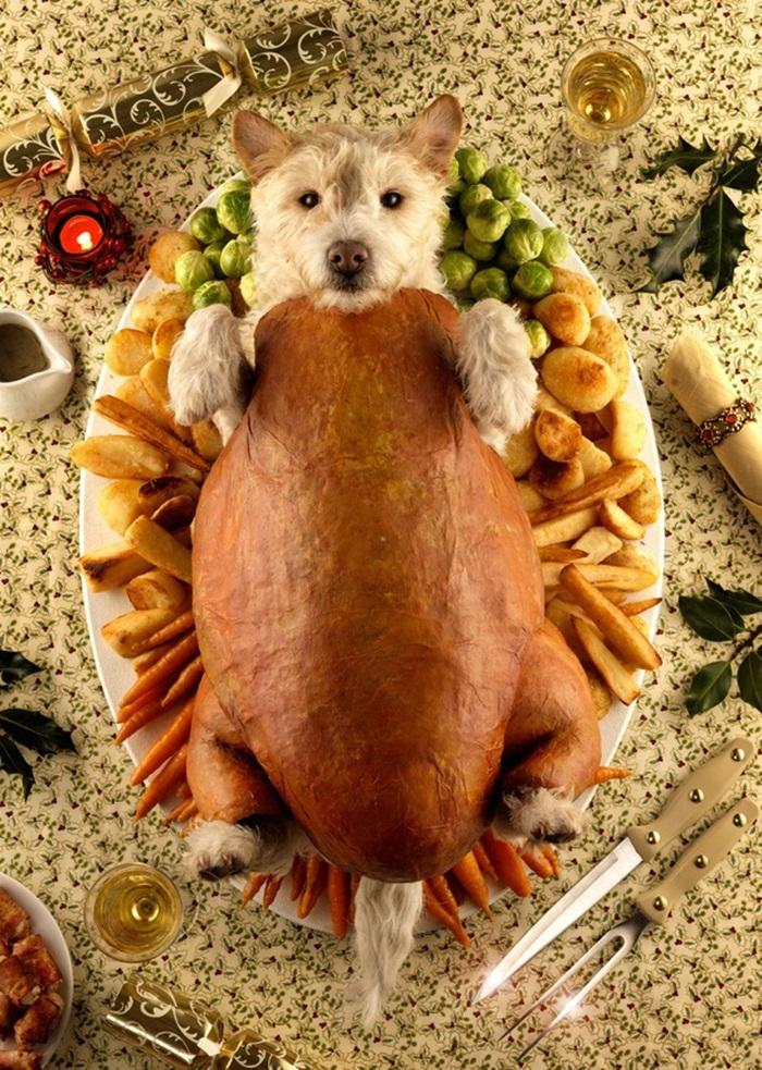 dog-roast-2009
