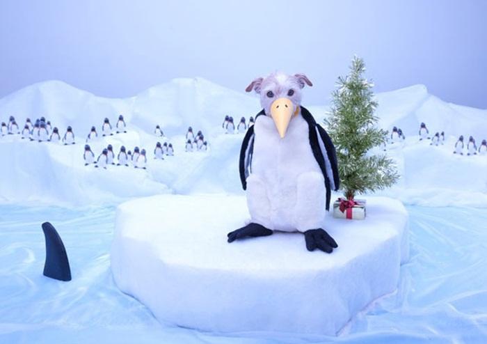 penguin-2011