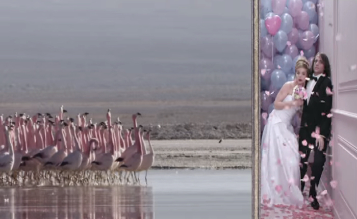 ช่องทีวี NAT GEO ออกโฆษณาขำย้ำดูช่องนี้แล้วจะอินกับธรรมชาติสุดๆ