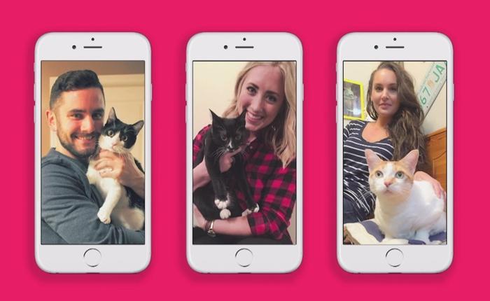 Tinder แอพฯ หาคู่เดท เปิดบริการหาบ้านให้น้องแมวแล้ว