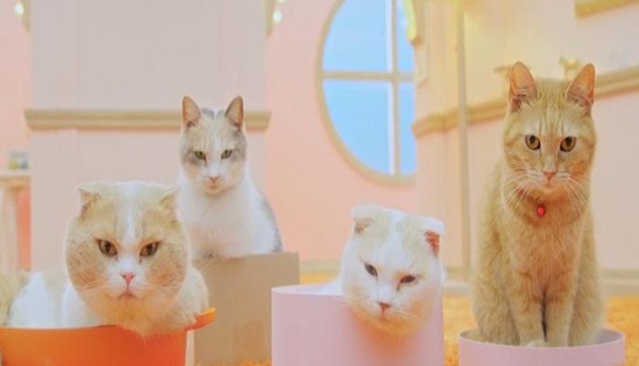 What does the cat say? แบรนด์มือถือญี่ปุ่นออกแคมเปญไขความลับว่าน้องแมวพูดอะไรกัน