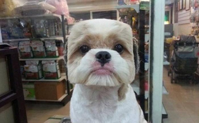 กระแสตัดขนสุนัขเป็นทรงสีเหลี่ยมมาแรงในไต้หวัน