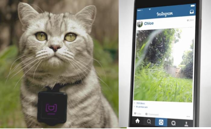 แบรนด์อาหารแมวออกแกดเจ็ทช่วยให้แมวเป็นช่างภาพ Instagram พร้อมให้เจ้าของเรียนรู้นิสัยแมวไปในตัว