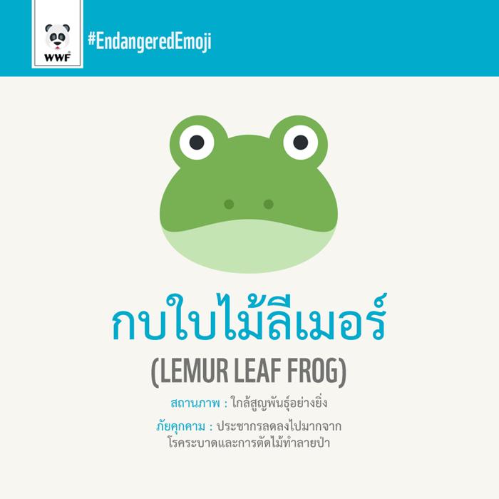 กบใบไม้ลีเมอร์ Limur Leaf Frog