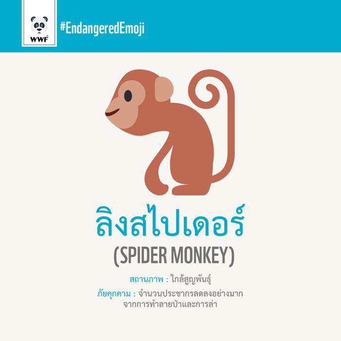 ลิงสไปเดอร์ Spider Monkey