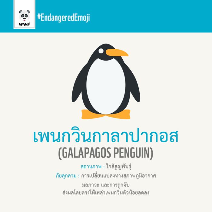 เพนกวินกาลาปากอส Galapagos-Penguin