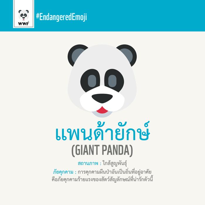 แพนด้ายักษ์ Giant Panda