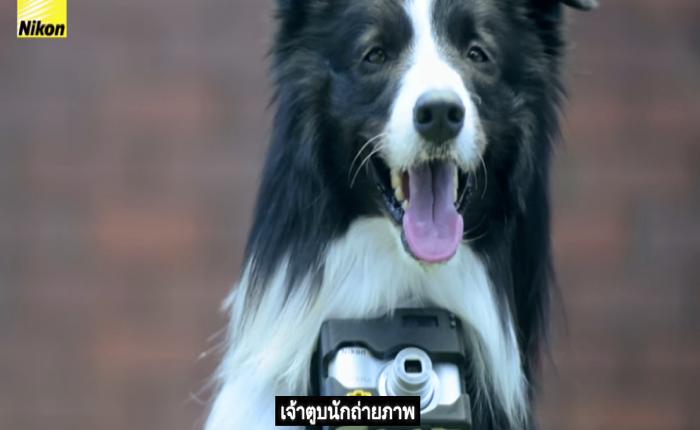 """NIKON โชว์ความเก๋าของกล้อง """"สั่น"""" ยังไงก็ยังได้ภาพสวยด้วยการให้น้องหมาเป็นช่างภาพซะเลย!"""