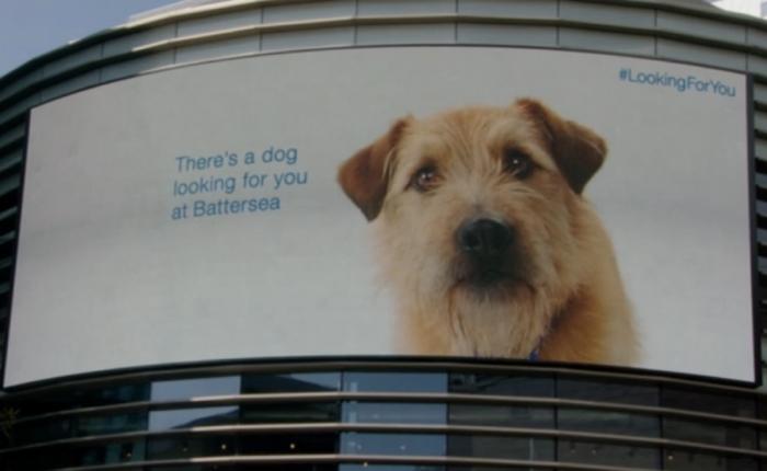 NGO กระตุ้นคนตัดสินใจรับน้องหมาไปเลี้ยง ด้วยวิธีตื้อแบบไฮเทค แทรก RFID Tag ไปในแผ่นพับ