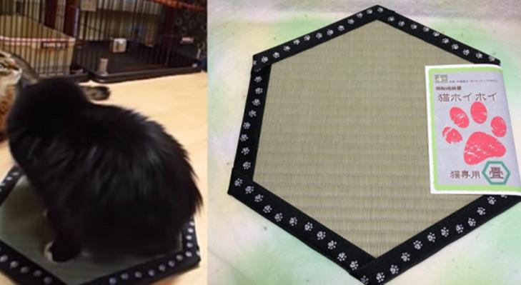 ญี่ปุ่นคิดเสื่อทาทามิล่อน้องแมวให้นั่งอยู่เฉยๆ