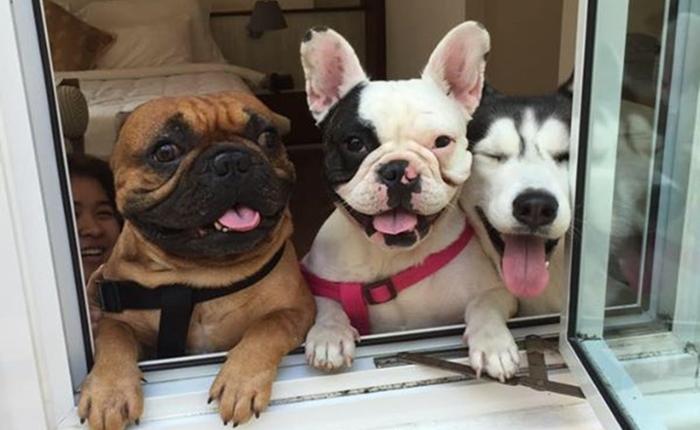 """""""เชอบัว ยูโร มายา"""" 3 น้องหมาเน็ต ไอดอลตัวใหม่ เปิดเพจแค่ 1 สัปดาห์ยอดไลค์ 1.7 แสน"""