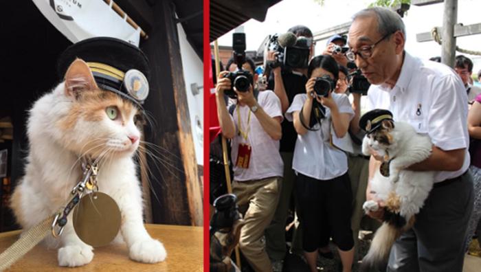 ทักทายข้าสิ! สถานีรถไฟญี่ปุ่นนำแมวตัวใหม่มาเป็นนายสถานี