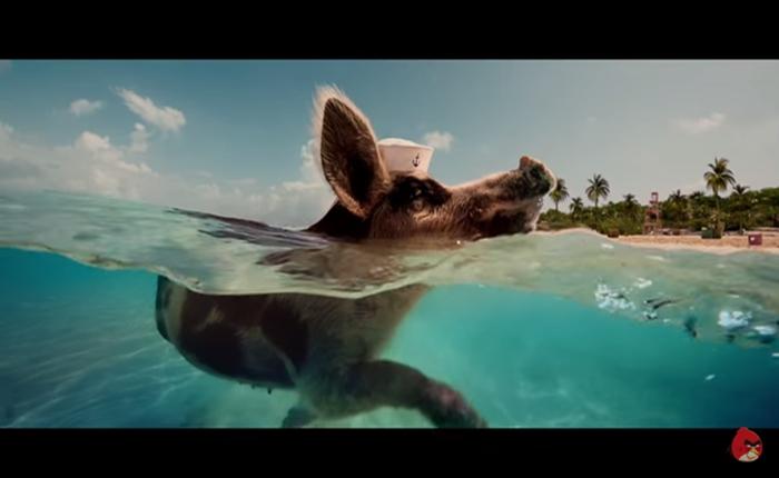 ตะลุยเกาะสวาทหาดหมูๆ หนังโฆษณาน่ารัก Angry Birds 2