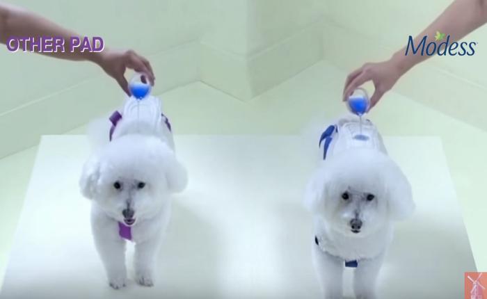 ครีเอทีฟช่างสังเกต! ใช้น้องหมาซุกซนช่วยขายผ้าอนามัยได้อย่างน่าร๊าก