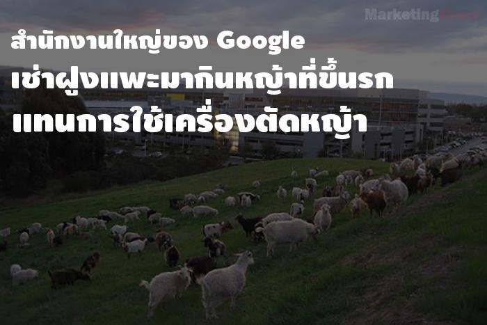 google goat