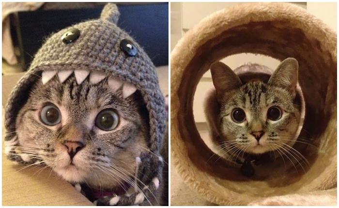 """มารู้จัก """"Nala"""" น้องแมว pet idol ที่มีคนตามมากกว่า 2 ล้านฟอลโลเวอร์"""