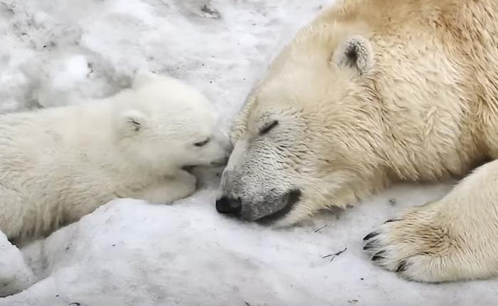 WWF ส่งโฆษณาน่ารักเมื่อสัตว์น้อยก็ไม่ต่างจากมนุษย์เราต่างก็เป็นสัตว์โลกที่น่ารักด้วยกันทั้งนั้น!