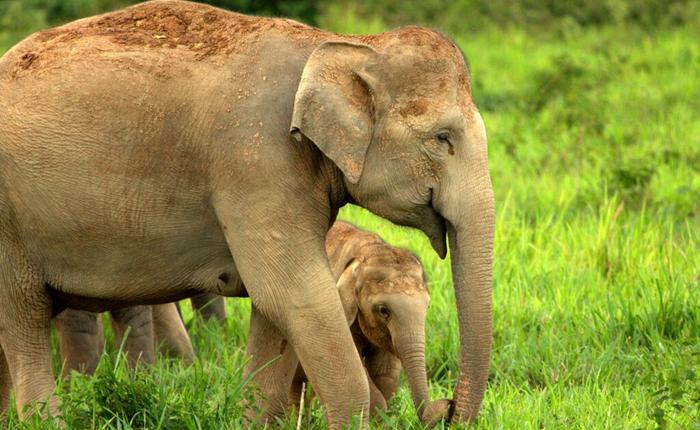 กองทุนสัตว์ป่าโลกชูพื้นที่กุยบุรี มีการจัดการความขัดแย้งระหว่างคนกับช้างป่าดีที่สุดในเอเชีย