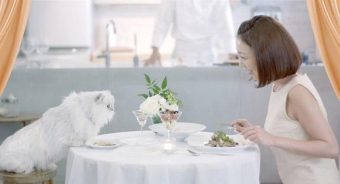 Nestle Japan จ้างเชฟมาทำอาหารให้คนกับแมวกินร่วมโต๊ะกันได้