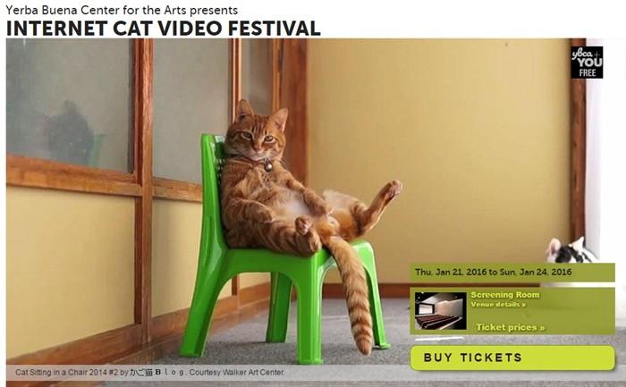 ชาวซานฟรานฯ จัดนิทรรศการเซเลบแมวออนไลน์เอาใจทูนหัวของบ่าว