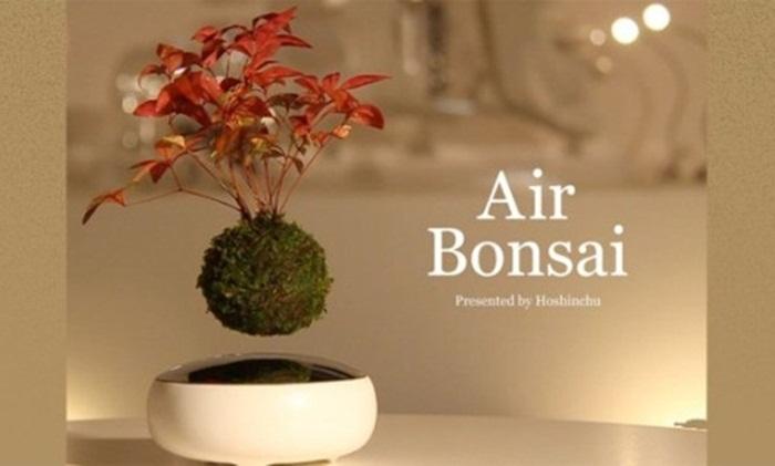 สตาร์ตอัพญี่ปุ่นคิด Air Bonsai บอนไซลอยอากาศเจ้าแรกของโลก
