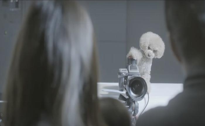 แบรนด์อาหารสัตว์จับน้องหมามาเป็นช่างภาพ ผลลัพธ์ที่ได้ ตากล้องมืออาชีพยังต้องทึ่ง