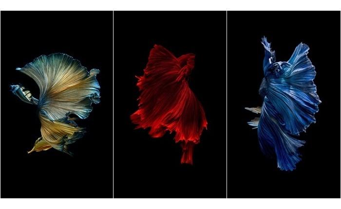 """""""เซ็นทรัล เอ็มบาสซี"""" จัดแสดงผลงานศิลปะภาพถ่าย """"ปลากัด"""" สุดเอ็กซ์คลูซีฟ"""