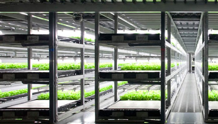 """ญี่ปุ่นเล็งสร้างแปลงผักแห่งแรกในโลกที่ทุกอย่างดำเนินการโดย """"หุ่นยนต์"""""""