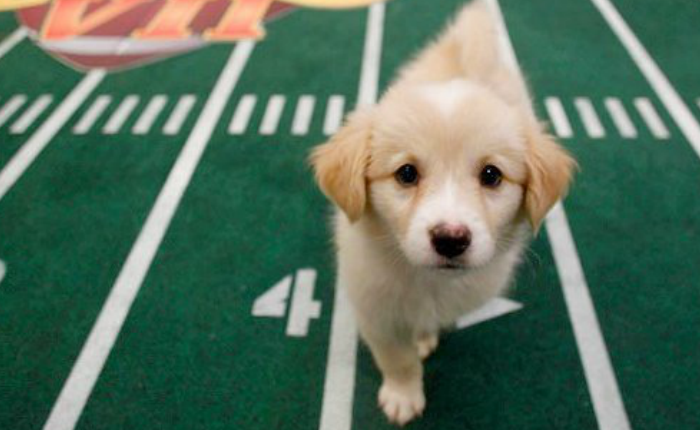 """Uber พร้อมส่ง """"น้องหมา"""" ถึงบ้าน ต้อนรับการแข่งขัน """"Puppy Bowl"""" อเมริกันฟุตบอลฉบับโฮ่ง"""