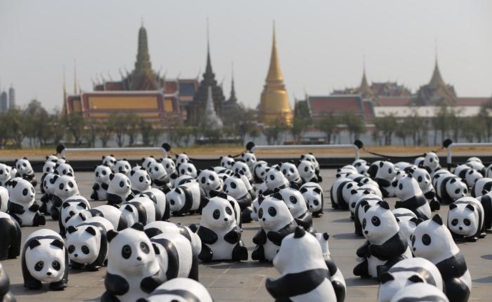 """กองทัพแพนด้ากว่า 1,600 ตัว """"สวัสดีชาวไทย!"""" เป็นครั้งแรก เริ่มภารกิจแฟลชม็อบประเดิมที่ """"สนามหลวง"""""""